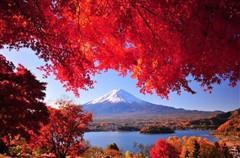 枫红醉了*日本本州六天赏枫之旅(东阪)