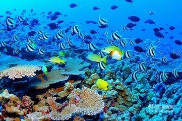 澳洲大堡礁8天阳光之旅