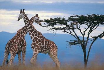 <南非八日游>约堡+开普敦-超值+经典
