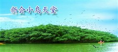 2017新会葵博园元旦活动?江门葵博园元旦好玩吗?
