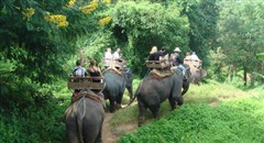 泰国缤纷美食享乐六天纯玩团