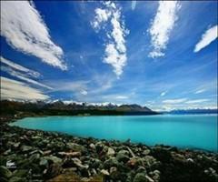 新西兰南岛西海岸有很火的蓝瘦香菇