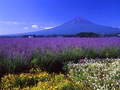 <日本六日游>日本品美食+泡温泉-亲子-乐享盛夏