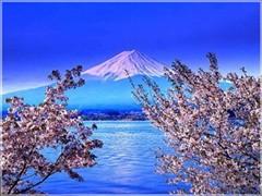 <日本五日游>东京+富士山-赏花-品质团