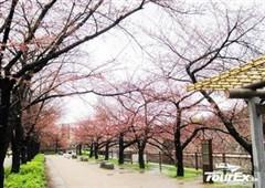 日本北海道5天休闲品质团