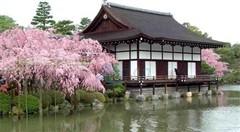 <日本六日游>日本本州-美食-温泉-薰衣草-紫色浪漫
