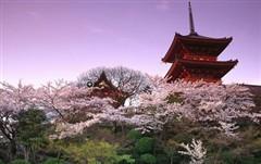 【东京交通攻略】日本东京地铁线路图,如何选择日本东京交通工具