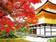 北海道薰衣草花期,2017日本北海道薰衣草最晚开到什么时候 - 马蜂窝