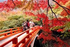 <日本五日游>日本北海道+泡温泉+赏花-美丽相约-紫恋北海道