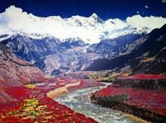 西藏旅游必看的美景-格桑花