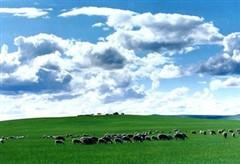 """内蒙古2017年游客人数破亿 """"万里茶道""""成跨境重点"""
