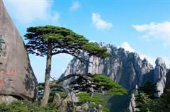 安徽A01线:(纯玩)春溢黄山、风水九都屏山、生态猴源双飞四天标准团