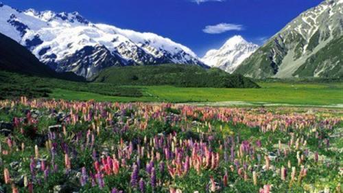 【新西兰】新西兰南北岛澳洲8天纯净之旅