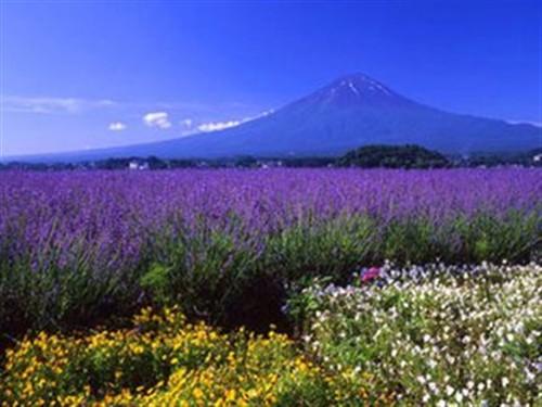 【日本】<日本六日游>日本+本州+东京-自由行