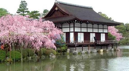 【日本】<日本五日游>日本北海道+赏花+温泉