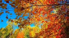 [国庆]<美国东西海岸-墨西哥风情小镇蒂华纳-加拿大深度-夏威夷17-18日游>全国联运,9、10月观加国枫叶,美不胜收的景色,就差你了