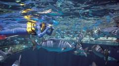 <澳大利亚-凯恩斯-布里斯班8日游>世遗蓝山,悉尼港游船晚餐,绿岛大堡礁出海,天堂农庄抱考拉,直升机观光体验,华纳电影世界畅玩