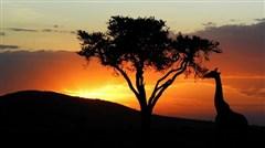 <肯尼亚机票+当地8天游>广州起止/肯尼亚航空/马赛马拉追寻野生动物/纳瓦沙