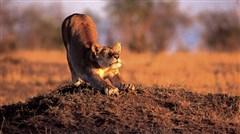 <肯尼亚-津巴布韦-赞比亚-博茨瓦纳12日游>惊艳非洲,穿越南部非洲,维多利亚大瀑布雄伟壮观,马赛马拉,广州直飞