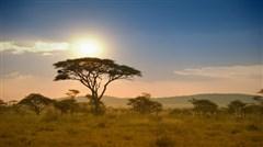 非洲肯尼亚10天高端摄影团