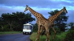 肯尼亚迁徙豪华八日