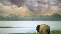 <赞比亚+津巴布韦+博茨瓦纳10日游>香港往返 特色餐 360玩转三角洲 骑上非洲大象