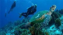 <惠州惠东2日游>畅享马尔代夫般的海岛美景三角洲岛,奇妙海龟岛,夜泡海滨温泉,食海味霸王鸭、海岛自助午餐