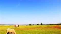 <希拉穆仁草原-响沙湾-成吉思汗陵-大召寺-内蒙古博物院双飞5日游>明星景点全含 牧场10项专享
