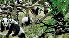 <广州长隆野生动物园-岭南古镇2日游>体验动物原始风貌