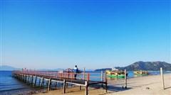 深圳观澜湖樱花2月份开的怎么样?2月观澜湖樱花好看吗?