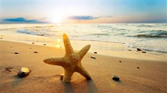 <深圳南澳西冲海滩1日游>,海边BBQ,沿海单车,快艇冲浪