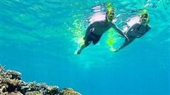 <澳洲新西兰大堡礁11日游>绿岛大堡礁,直升机翱翔,悉尼海港游船,蓝山大氧吧,牧场喂养明星动物