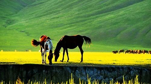 【哈尔滨】<哈尔滨-呼伦贝尔草原-呼伦湖-额尔古纳湿地-满洲里双飞双卧6日游>0购物、深度游、品尝蒙式早茶、品内蒙烤全羊