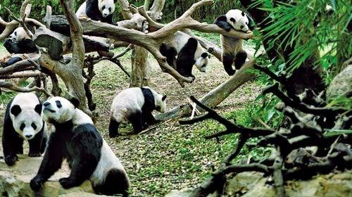 【长隆】<广州长隆野生动物园2日游>体验动物原始风貌、大夫山、沙湾古镇观感岭南文化