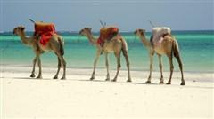[当季]<肯尼亚机票+当地10日游>马赛马拉升级入住园内/阿布戴尔入住英女皇树顶酒店/纳瓦沙/加游蒙巴萨,安享悠然假期/广州KQ