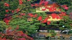 [春节]<日本本州6日游> 东京大阪各1天自由活动 随意畅游东京迪士尼和大阪环球影城 河口湖赏枫 和风全鱼