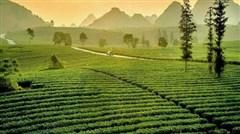 <清远巴士2日游>金龟温泉酒店、泡温泉、仙桥地下河、千亩茶园、田野绿世界赏红叶