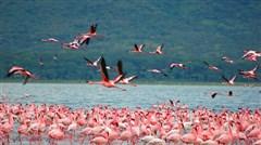 [当季]<肯尼亚10日游>南航直飞,20人精致小团,猎游马塞马拉,安博塞利,自费热气球,暑期升级树顶酒店,长颈鹿公园喂食,全国联运