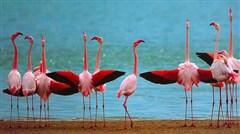 <肯尼亚机票+当地8日游>马赛马拉国家公园/阿布戴尔国家公园,阿布戴尔入住英女皇树顶酒店,内罗毕更升级五星酒店,广州KQ