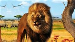 非洲肯尼亚动物大迁徙专属10日行程