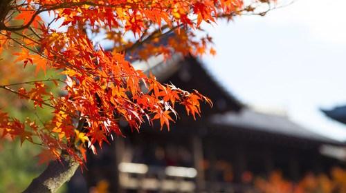 日本6日游_纯日本旅游_去日本游怎么省钱_日本5日游