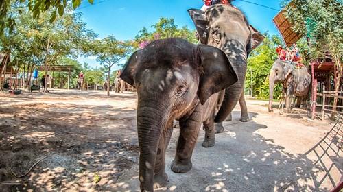 泰国6日游_泰国旅游大概多少钱_到泰国旅游多少钱_泰国跟团还是自由行