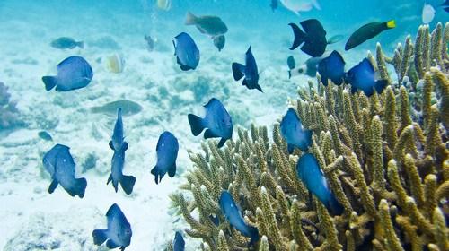 【沙巴】<沙巴机票+当地5日游>暑期跟团游 文莱 沙巴两国联游 大堡礁 沙皮岛