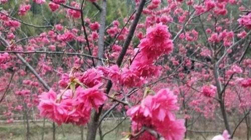 【清远】<清远2日游>入住篁胜温泉国际花园酒店、犇逸农家乐庄园、百亩桃花、天子山瀑布群
