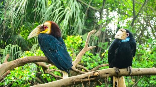 【广州】<广州长隆野生动物园2日游>体验动物原始风貌、大夫山、沙湾古镇观感岭南文化