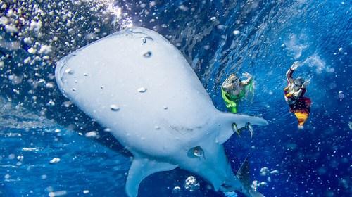 长隆2日游_现在到珠海旅游多少钱_珠海自由行旅游团_珠海旅游跟团需多少钱